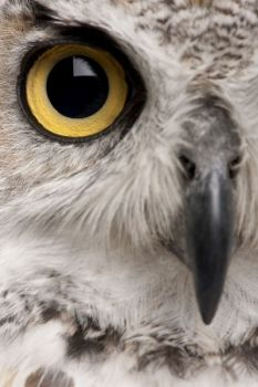 The free June 25 wildlife photography workshop will focus on close-up photography, and will be held at the Pisgah Center for Wildlife Education in Brevard.
