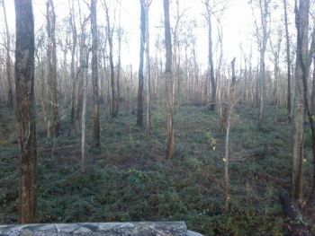 Thick early season cover such as these briars, leads to narrow shooting lanes and quick opportunities.