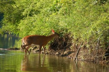 The SCDNR has expanded the deer hunting closures in South Carolina's Pee Dee and Waccamaw River regions beginning Wednesday, Sept. 19, 2018.